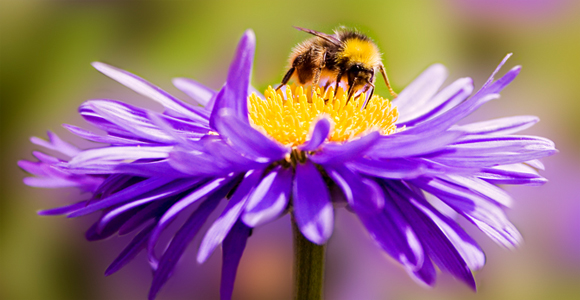 Love Honey? Learn How To Nurture Your Own!